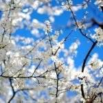 794 Снится Весна