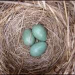 997 Снится Гнездо