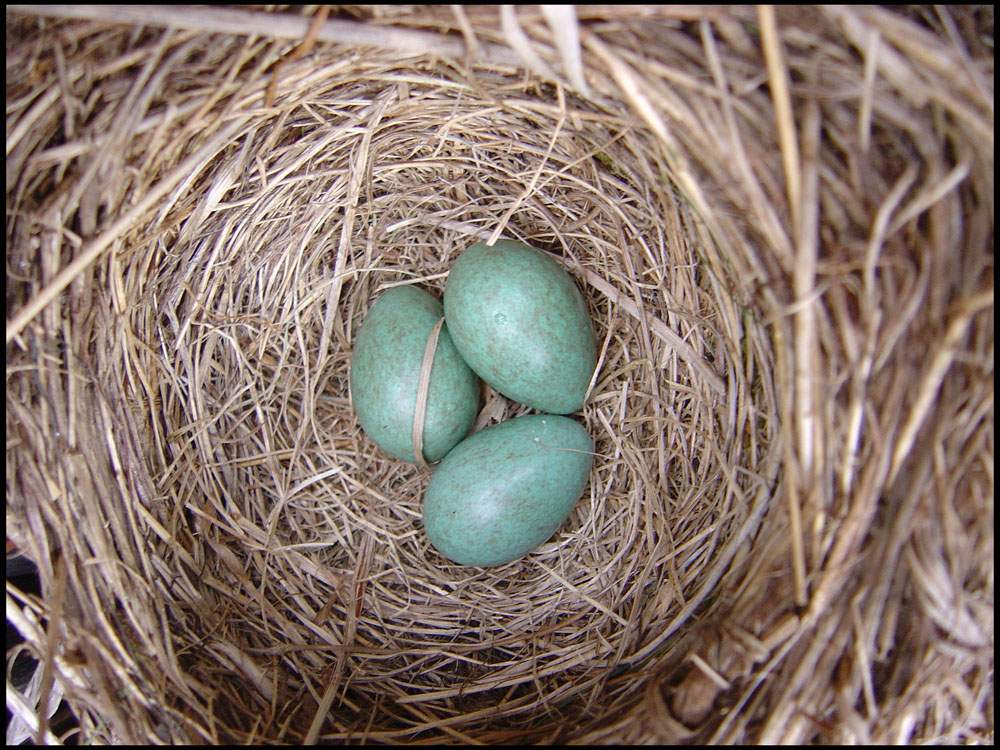 Снится Гнездо