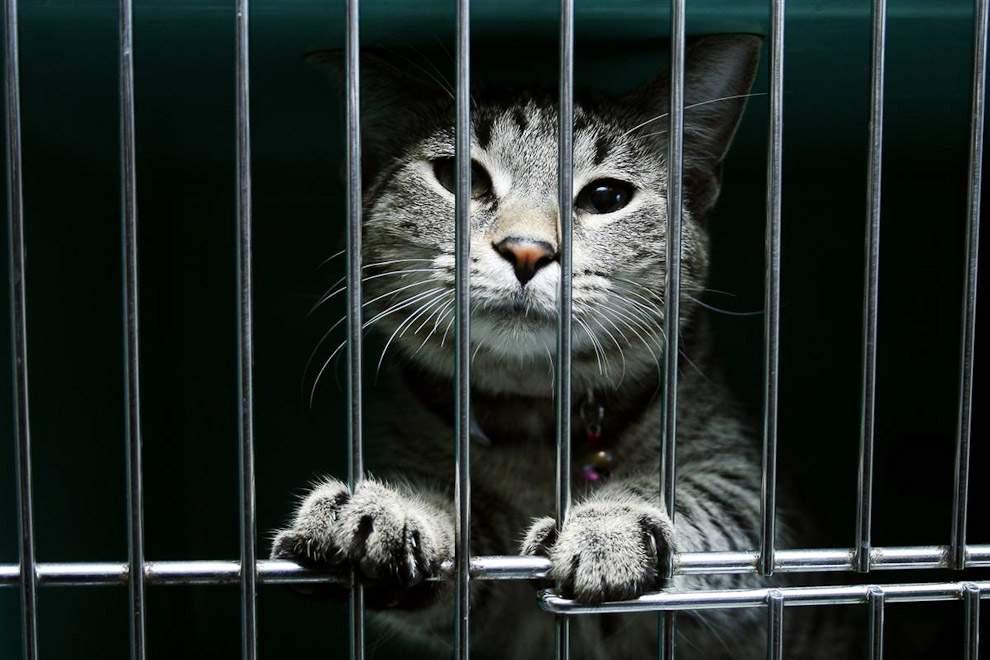 Снится Заключенный