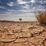 2574 Снится Засуха