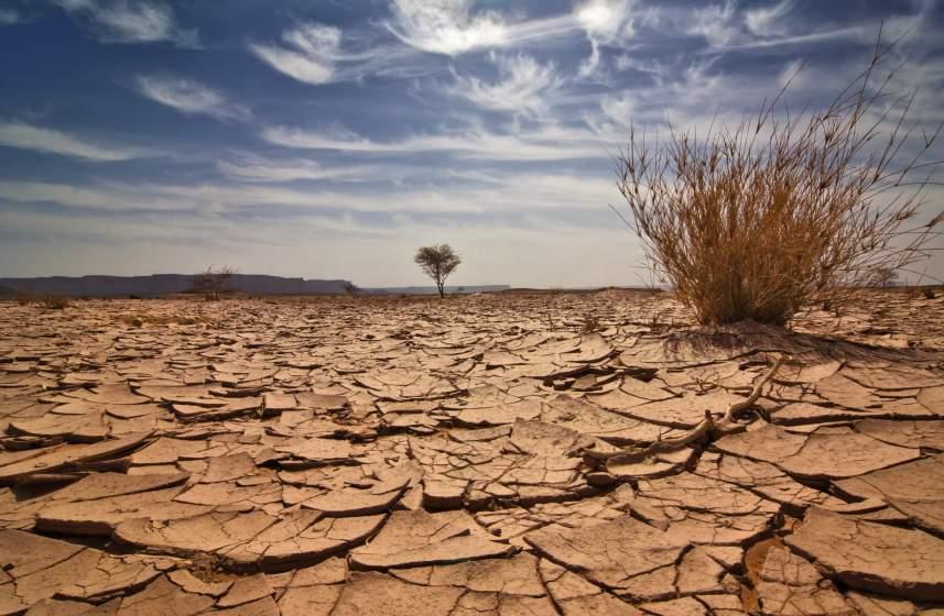 Снится Засуха