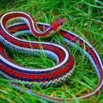 2652 Снится Змея