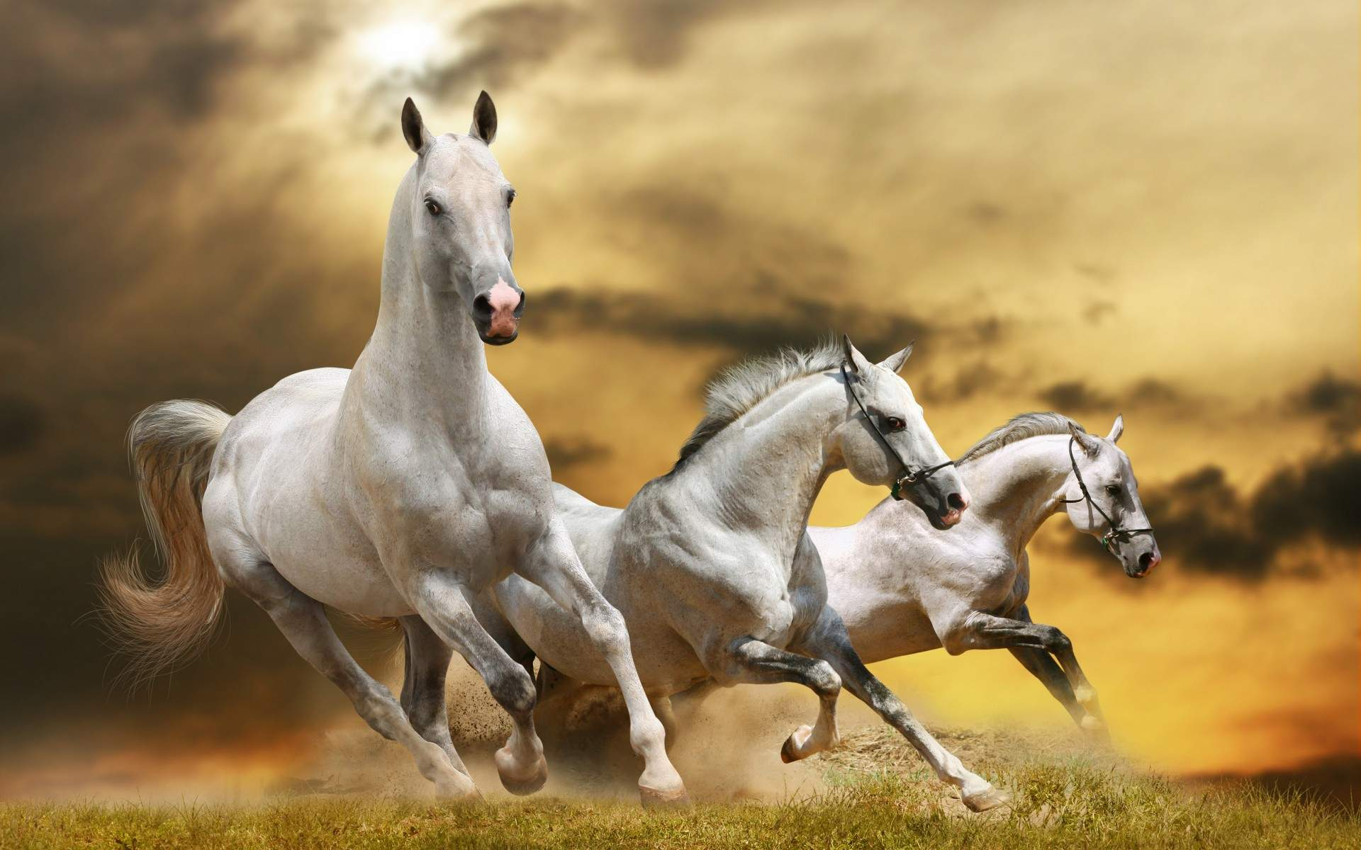 Снится Конь