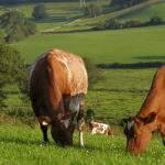 3334 Снятся Коровы