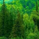 3799 Снится Лес