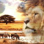 4604 Снится Африка