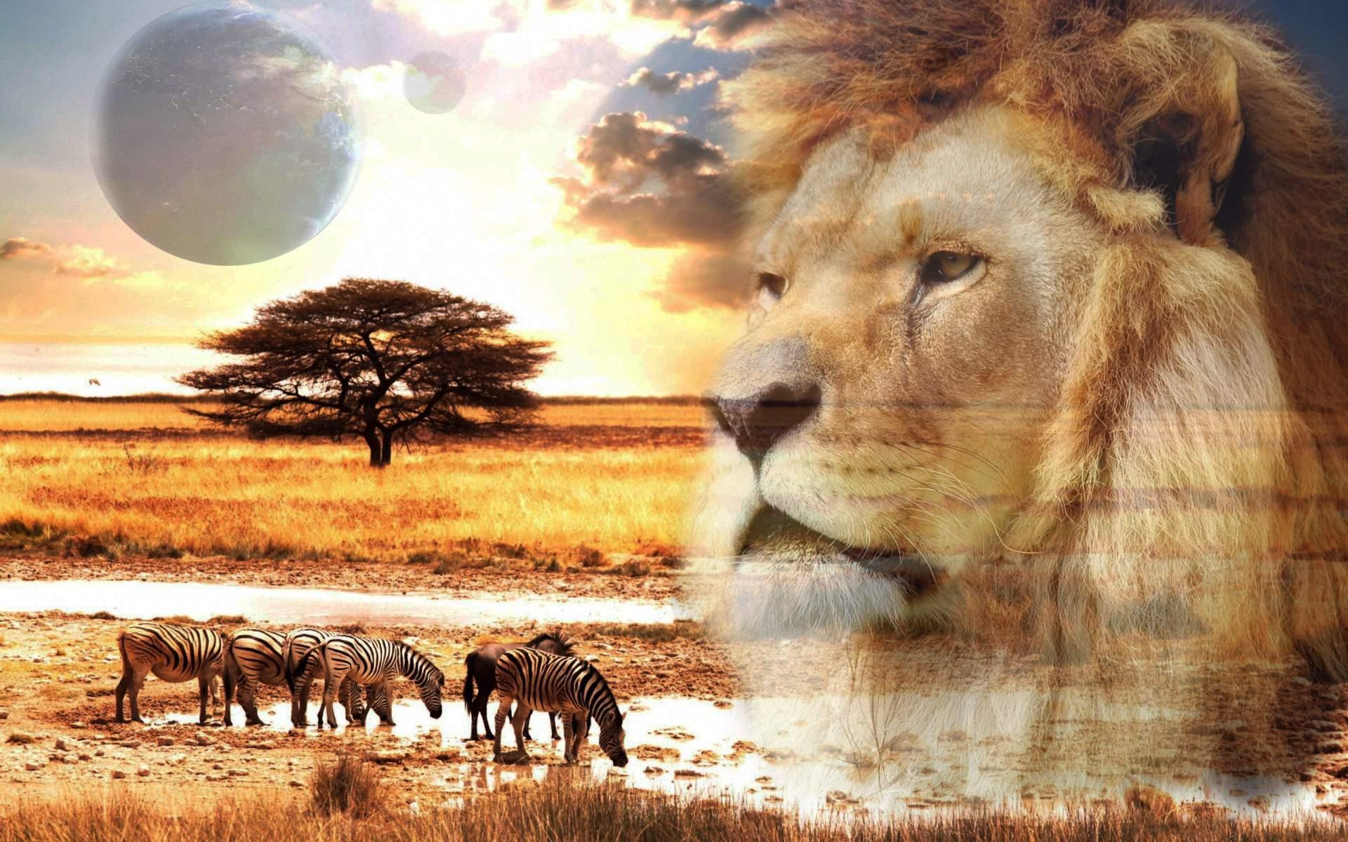 Снится Африка