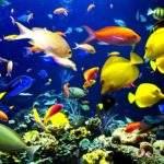 5965 Гороскоп на 2016 год Рыбы