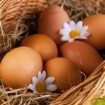 6024 Снятся Яйца