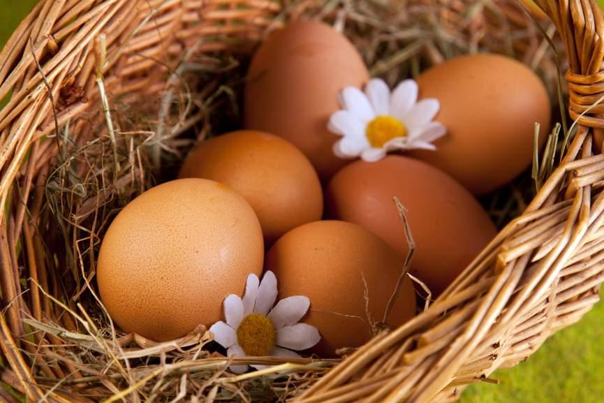 Снятся Яйца