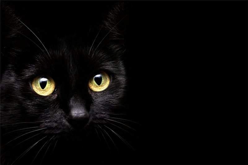 Снится Черный