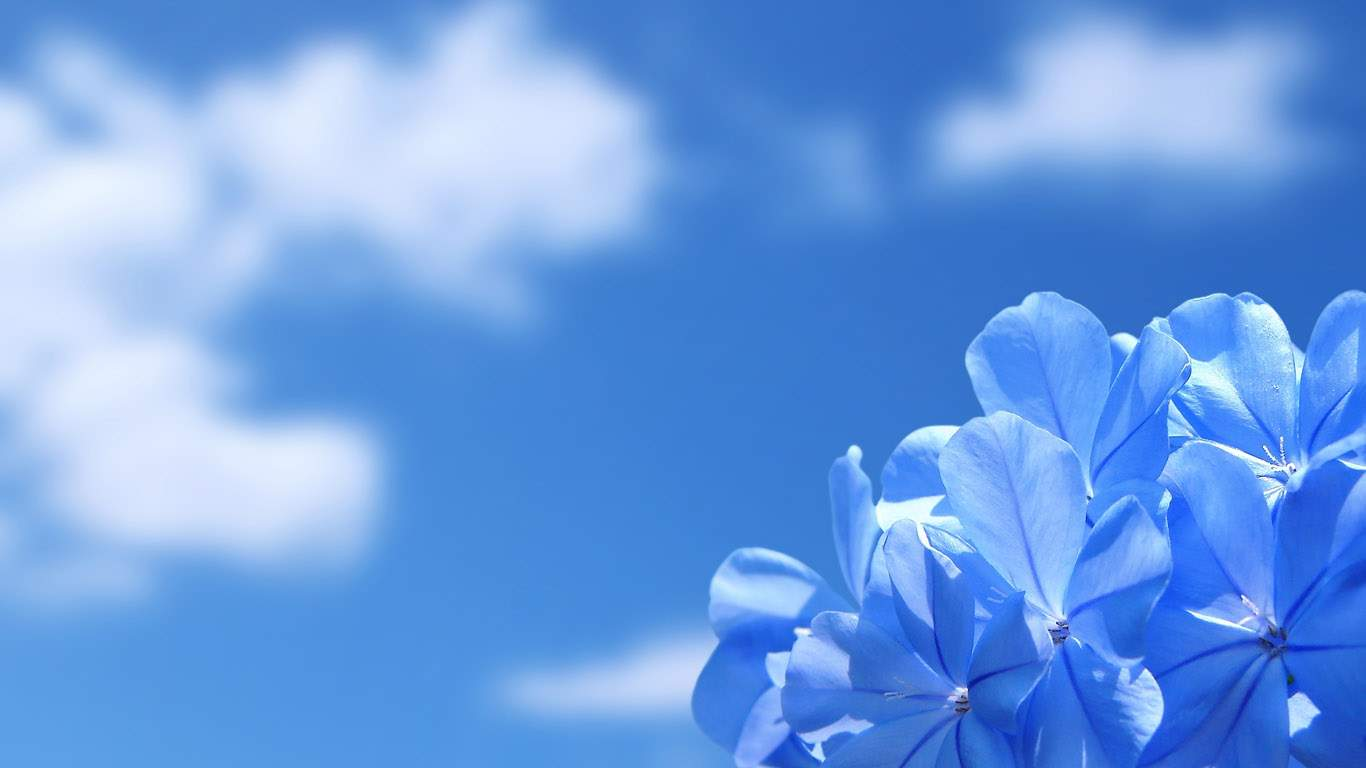 Снятся Цветы