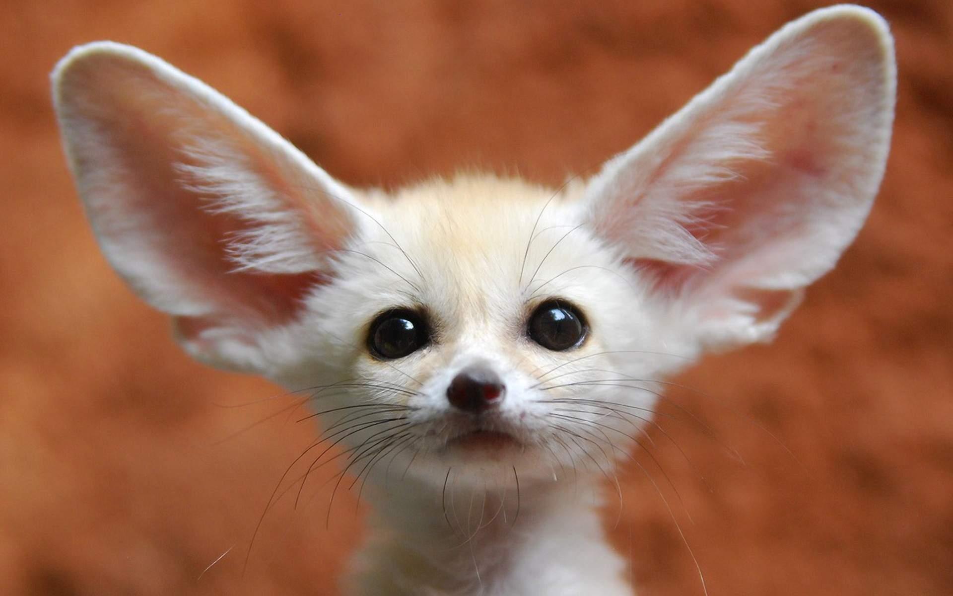 Снятся Уши