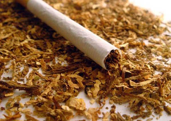 Снится Табак