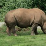 7922 Носорог