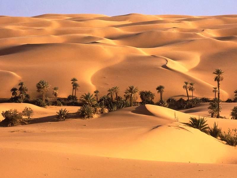 9302 Снится Пустыня