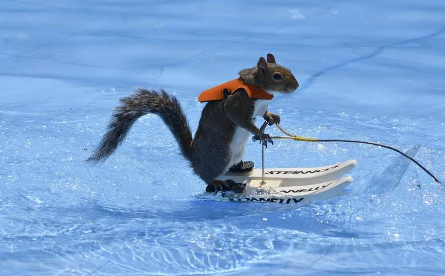 Водный лыжный спорт