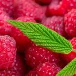 10429 Летние гадания на фруктах