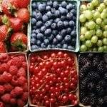 10522 Гадания на ягодах