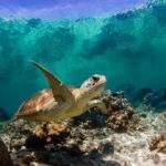 11844 Морская черепаха