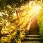 13740 Солнечный свет