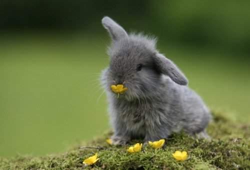Лапа кролика
