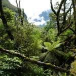 13952 Дождевой лес