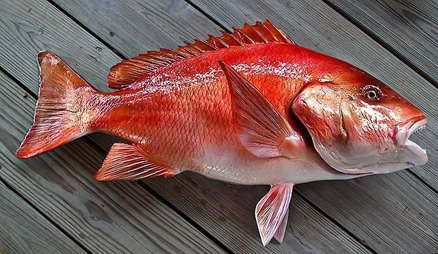 Красный люциан