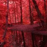 14093 Красные деревья
