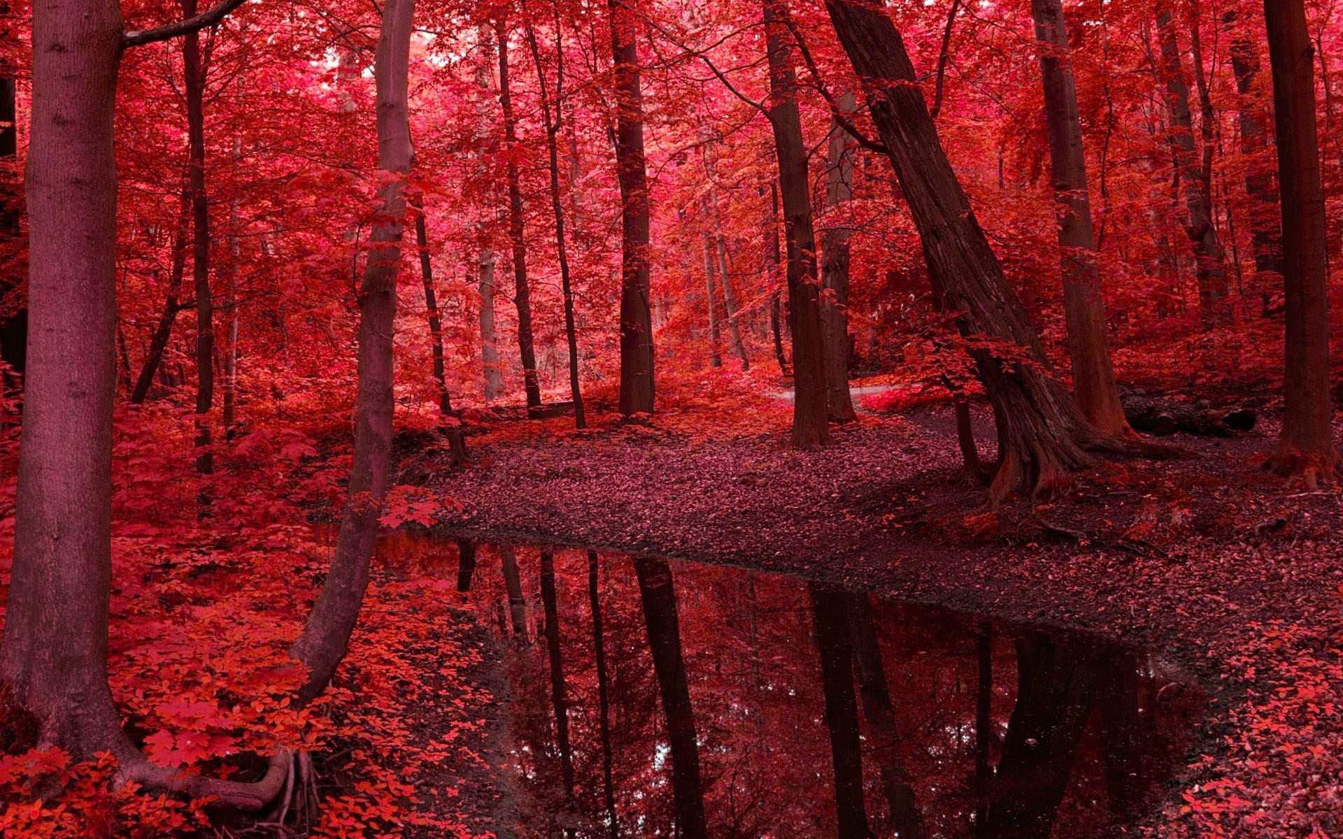 Красные деревья