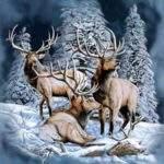 14129 Снится Северный олень