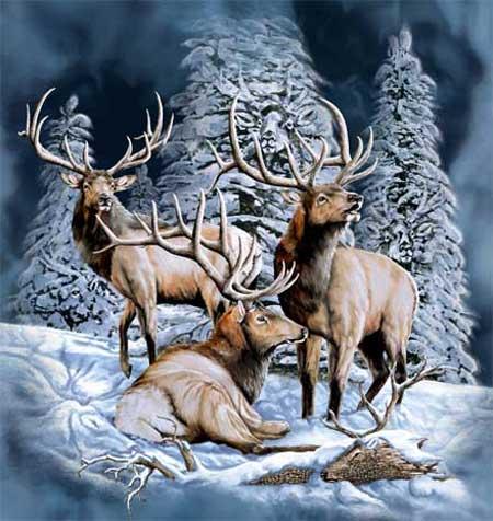 Снится Северный олень