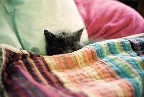 Снится Ложитесь спать