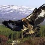17916 Снится Большая птица
