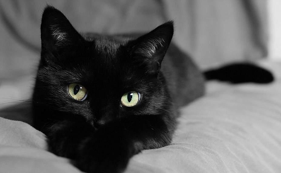 Кошка, выпрыгнувшая из кустов, оскаленная, нападающая, – не ждите ничего хорошего.