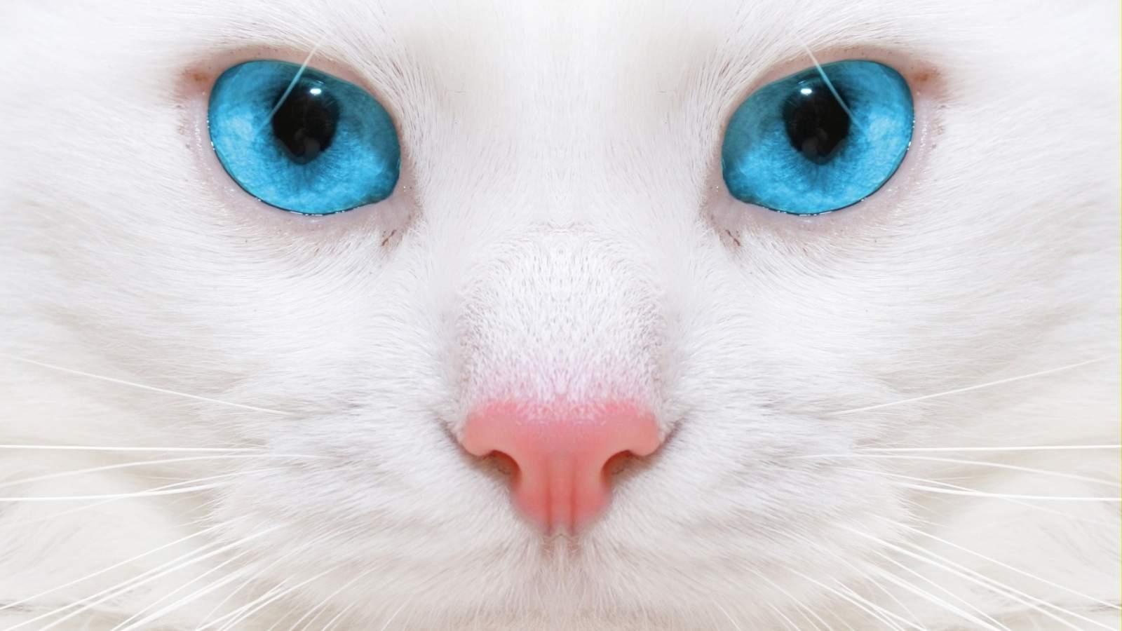 Снятся Глаза кошки
