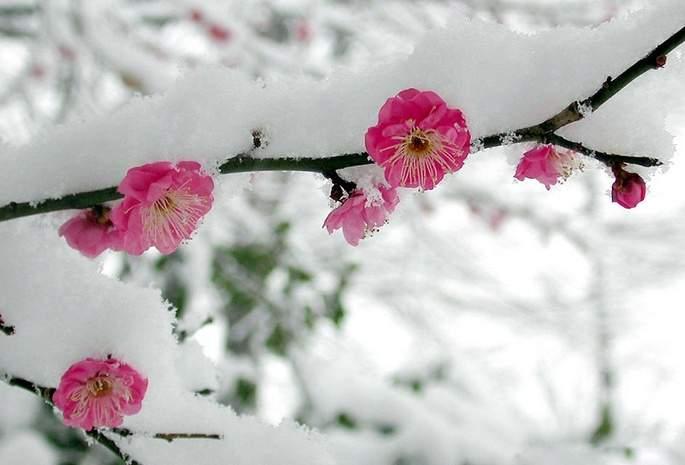 Лунный календарь сновидений с 16 — 28 февраля 2019
