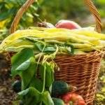 18774 Лунный календарь садоводства с 1 - 15 августа 2019