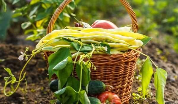 Лунный календарь садоводства с 1 — 15 августа 2019