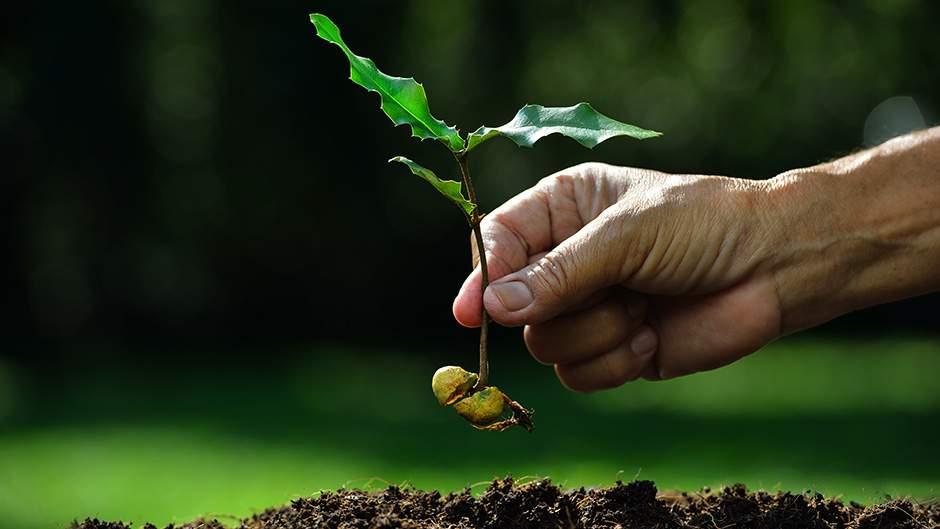 Снится Выращивать