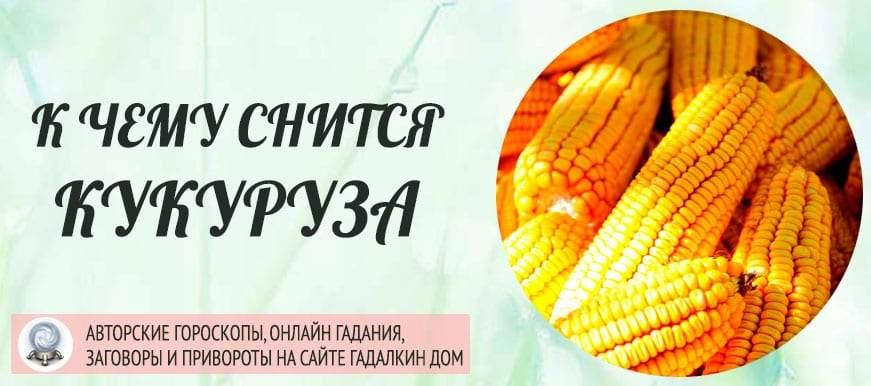 К чему снится кукуруза: толкование значения сна по различным сонникам для мужчин и женщин