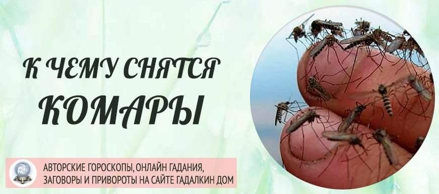 К чему снятся комары: толкование значения сна по различным сонникам для мужчин и женщин