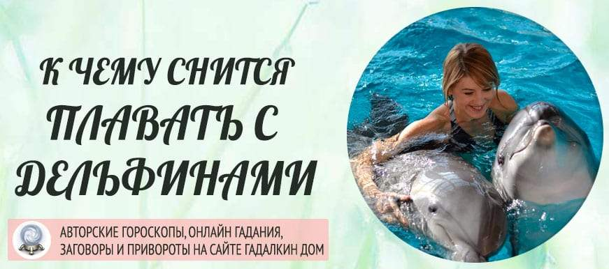 К чему снится плавать с дельфинами: толкование значения сна по различным сонникам для мужчин и женщин