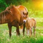 20873 Лошадь с жеребенком толкование сонника