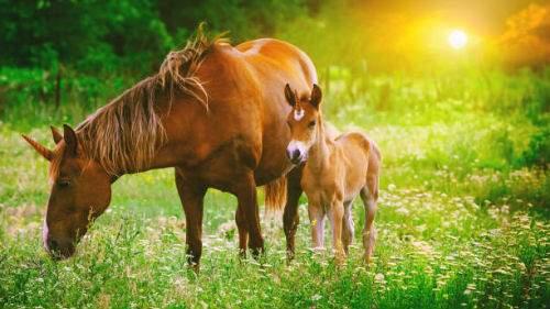 Лошадь с жеребенком толкование сонника
