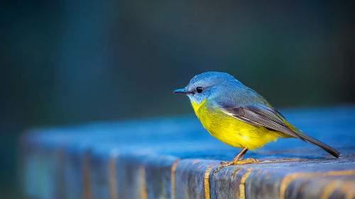 Маленькая птичка толкование сонника