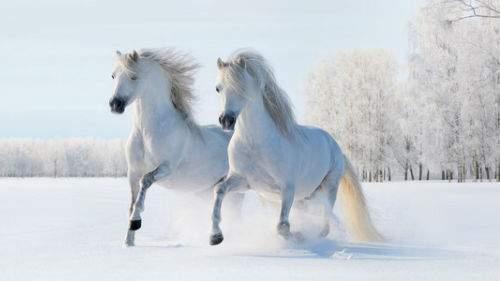 Лошади бегут толкование сонника