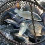 21049 Ловить рыбу сачком толкование сонника