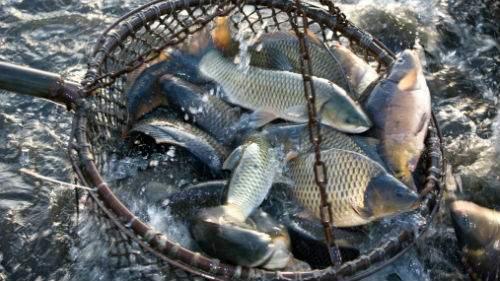 Ловить рыбу сачком толкование сонника